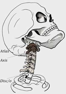 neck - cervical spine (chiropractic)